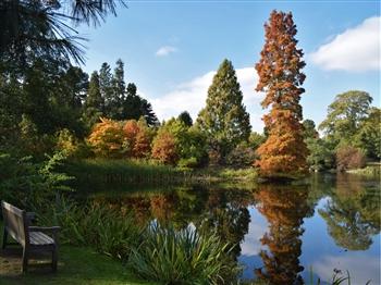 Autumn Gold at Kew Gardens